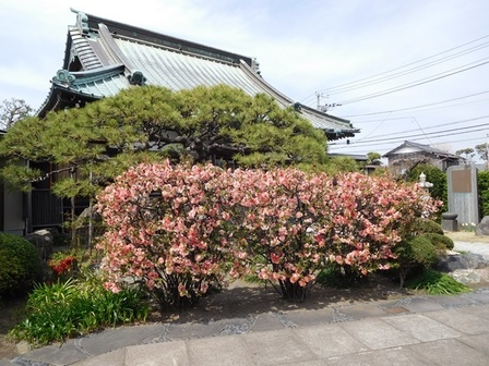 九品寺サラサボケ2.JPG