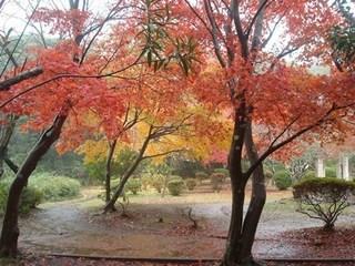 源氏山公園.JPG