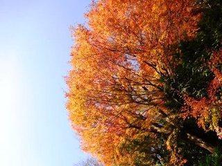 瑞泉寺庭園横紅葉.JPG