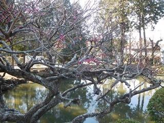 白鷺池紅梅1.JPG