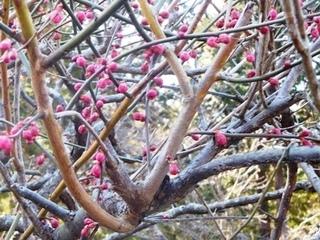 白鷺池紅梅2.JPG