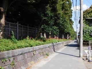 鶴岡八幡宮ヒガンバナ1.JPG