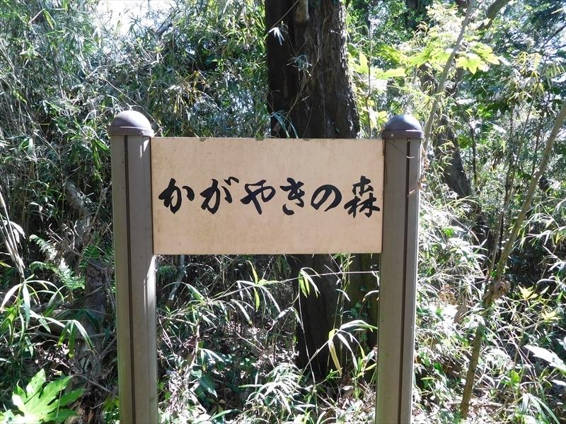 かがやきの森_R.JPG