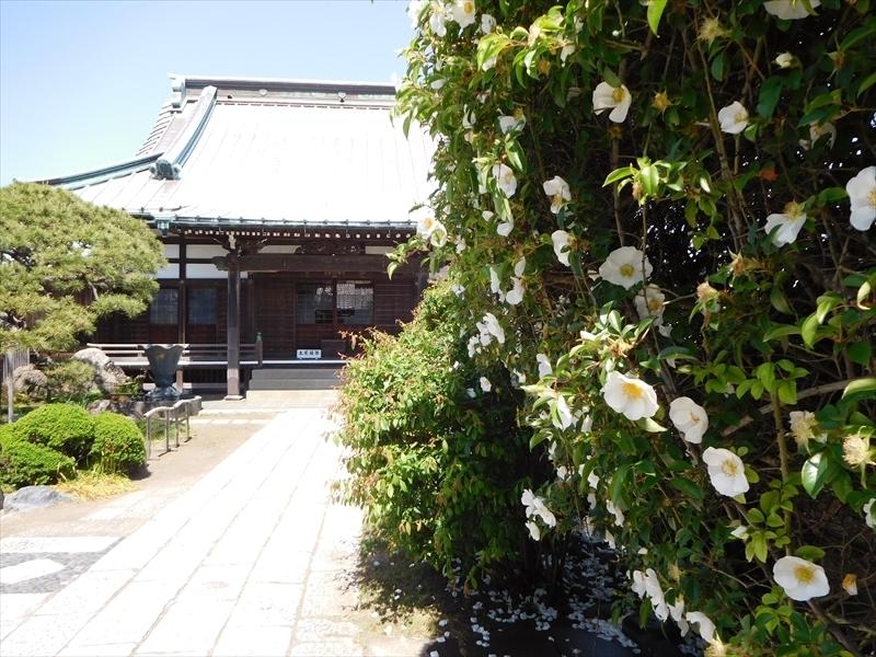 九品寺ナニワイバラ.JPG