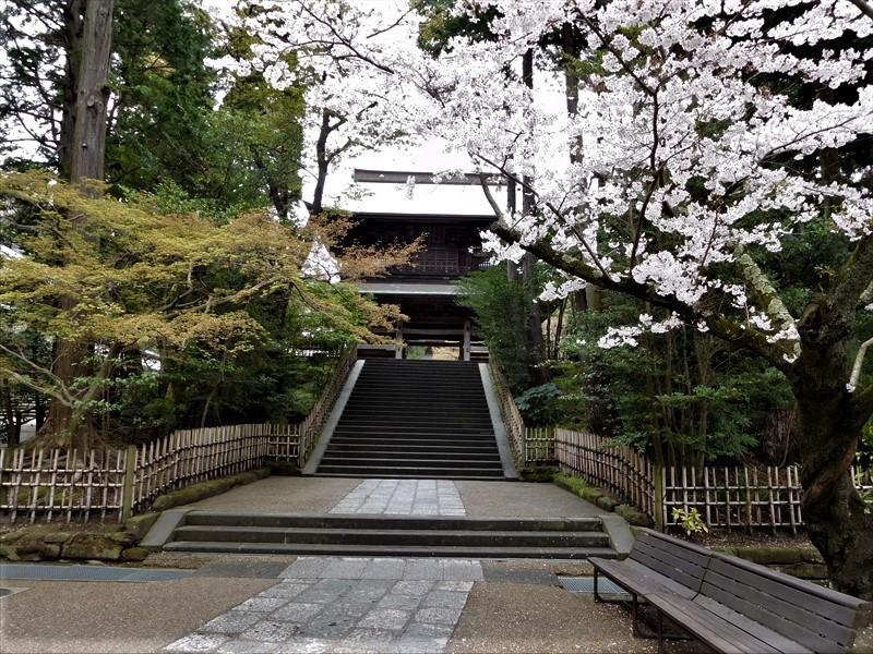 円覚寺サクラ.JPG