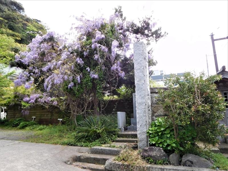 別願寺フジ_R.JPG