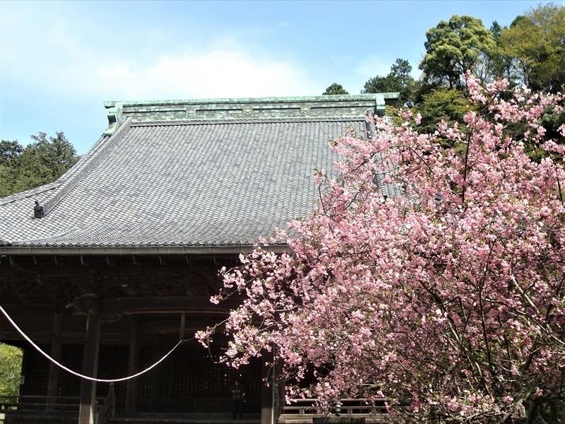 妙本寺カイドウ_R.JPG