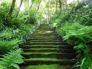 妙法寺苔の階段2.JPG