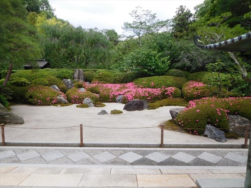 明月院庭園サツキ_R.JPG