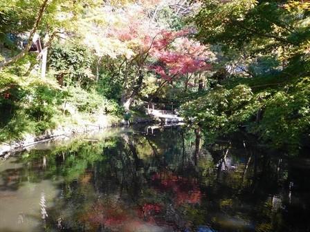 柳原神池紅葉2_R.JPG