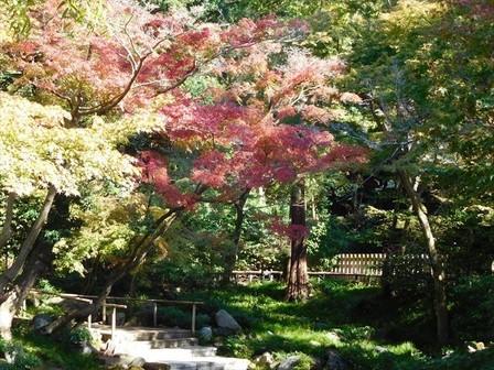 柳原神池紅葉3_R.JPG