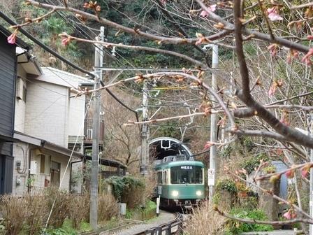 江ノ電とカワヅザクラ1.JPG