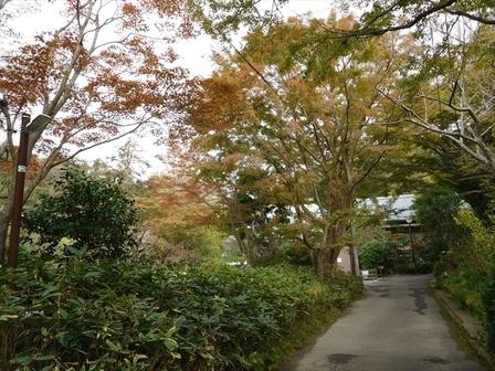 浄妙寺紅葉1.JPG