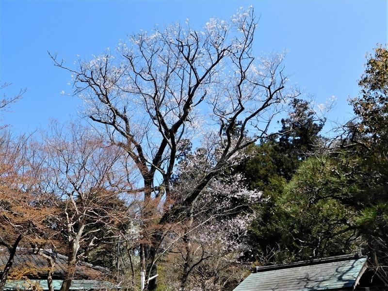 浄智寺タチヒガン_R.JPG