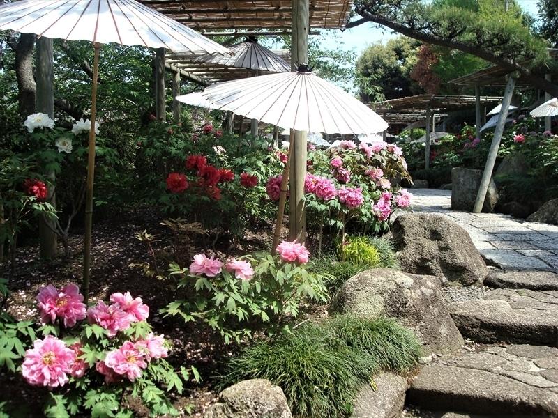神苑ぼたん庭園_R.JPG