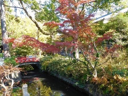 鎌倉国宝館前紅葉1_R.jpg