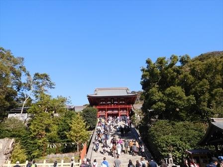 鶴岡八幡宮子イチョウ黄葉1_R.JPG